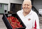 Chilli is big business in the Burnett