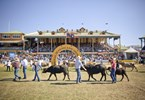 Ekka brings Queenslanders back to the bush