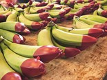 Pacific Coast Eco Bananas ready for market