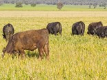 A two-day workshop for graziers aimed at developing grazing management strategies to increase profit and sustainability will be held at Emerald this month