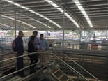 Wiley senior process engineer Michael Matthewson outlaying the design at the re-opening of the Dalby Saleyards. Image: Robert Barron via Facebook
