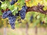 Four new directors commence at the Australian Grape and Wine Authority from today