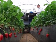 7 interesting crop harvesters from around the world