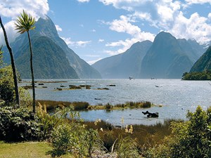 on the road to Milford Sound