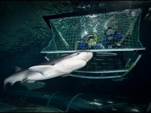 A selfie with a shark at Kelly Tarlton's in Auckland