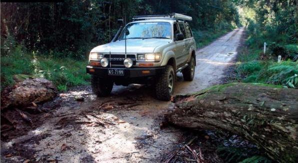 driving on rainforest tracks