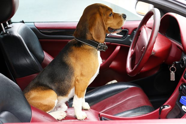 How to keep your pets car-safe