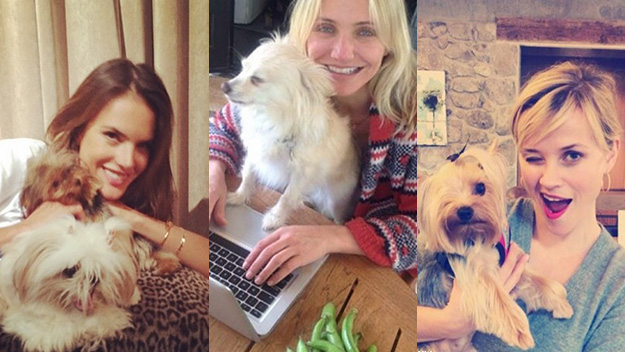 Celebrities and their canine pals