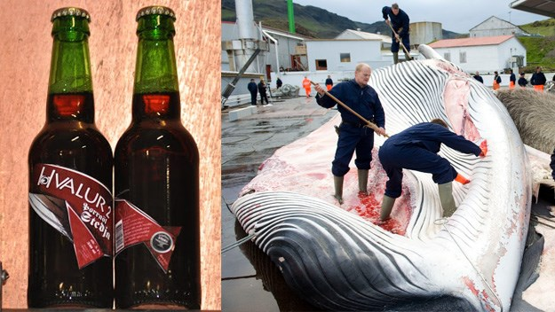 The Hvalur brew made from smoked whale testicles