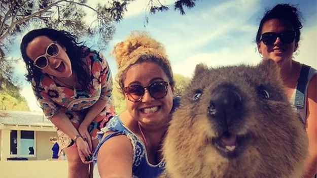 TRENDING: Have you taken your Quokka selfie yet?
