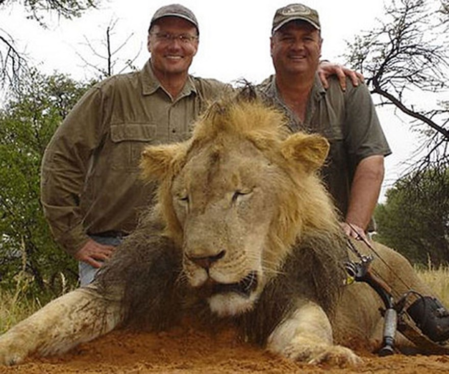 Man who skinned and beheaded lion under siege