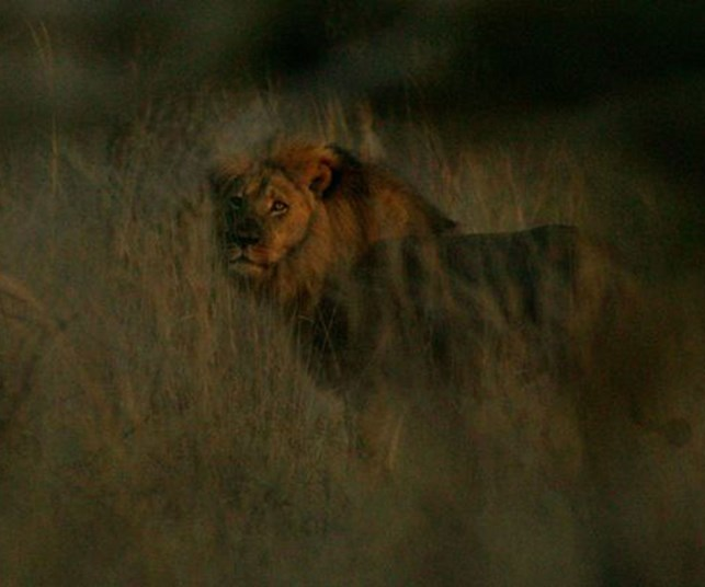Cecil the lion's brother found alive