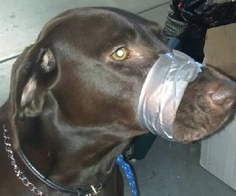 Woman duct tapes dog's mouth shut