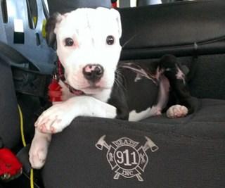 Brave boy: Meet Jake the rescue fire dog