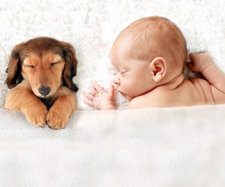 puppy with baby