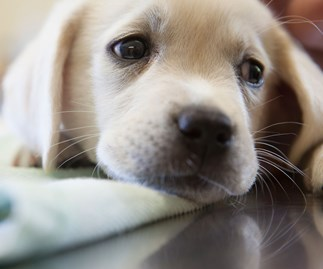 Why having a sick dog is the same as having a sick child