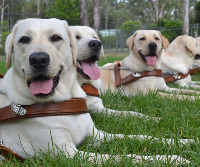 Meet the dogs changing lives
