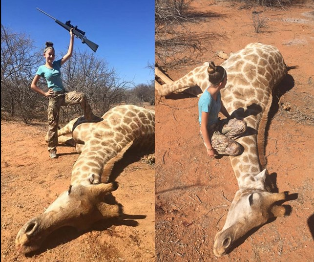 'I am a hunter': Girl, 12 defends pictures of dead giraffe