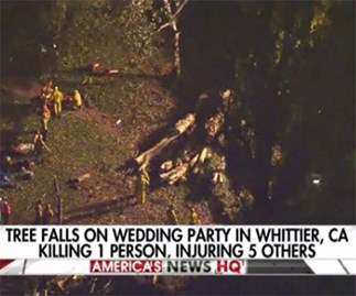 Tragedy as eucalyptus tree falls on bridal party, killing one and injuring five others