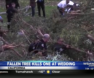 Woman who died from falling tree identified as mother of the bride