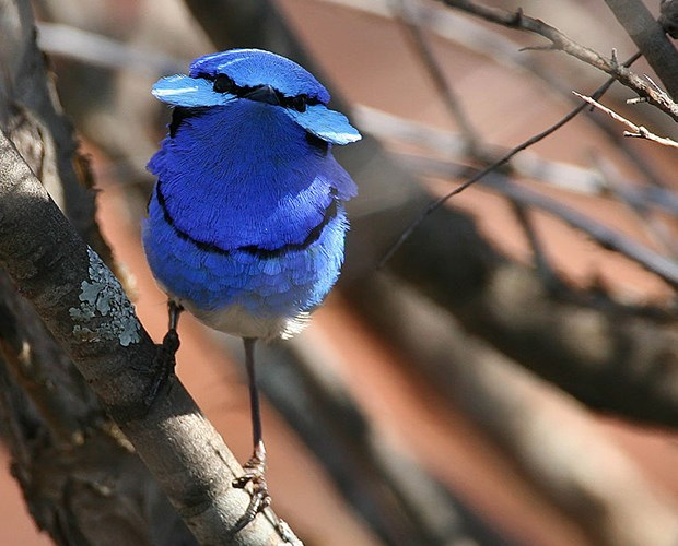GALLERY: The incredible colours of birds - Australian Geographic