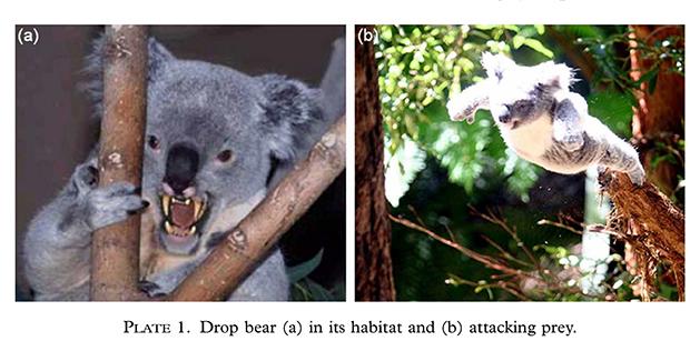 [Image: drop-bear-image.jpg]