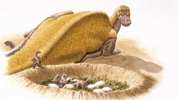 Ouranosaurus  Dinosaurussen