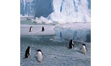 Taylor Glacier In Antarctica S Mcmurdo Dry Valley For Kids