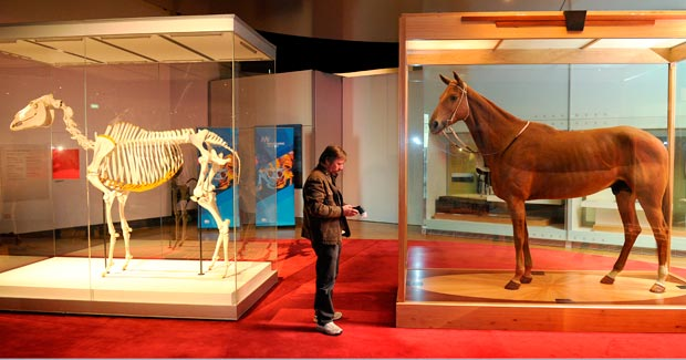 phar lap heart of a nation Phar lap was a thoroughbred race horse with an incredible story  he was an  underdog who succeeded through hard work and heart,  they saw in him traits  that they valued as a nation, and they thrilled to see him win.
