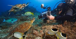 Diver photographs Coral Sea marine life. (Credit: Getty)