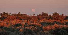 There's a new dawn for conservation at Boolcoomatta station in outback SA. (Credit: Annette Ruzicka)