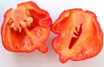 The Scorpion Butch T. is the world's hottest chilli. (Credit: The Chilli Factory)