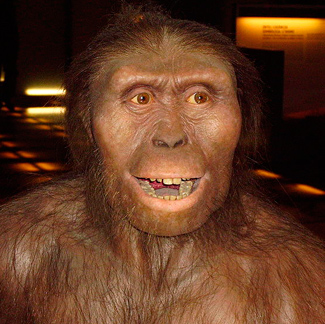 What did australopithecus look like
