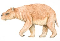 The diprotodon was the size of a modern-day rhinoceros. (Credit: Queensland Museum)