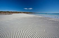 Morton Bay Beach, Eyre Peninsular, South Australia. (Credit: Anne Clarke)