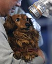 A pet dog is screened for radiation in Tamura, Fukushima Prefecture, north-eastern Japan. (Credit: AP/Kenji Shimizu)