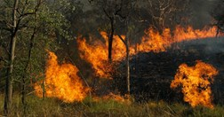 Bushfires are a regular feature of the Australian outback (Photo: ANU).
