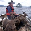 Kangaroos are rescued from recent flood waters by wildlife workers at Lake Burrendong near Wellington, NSW (Photo: AAP/Lake Bu