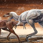 The species may not be a <em>T.rex</em> relative after all. (Image: Lida Xing)
