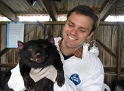 In a file photo, Alex Kreiss holds Tasmanian devil, Cedric, thought to be immune to DTFD. (Photo: Menzies Research Institute)