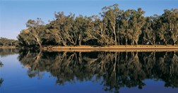 Red gums along the Murray Riverina, NSW (Photo: Bill Bachman)