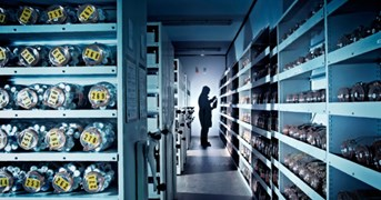 The journey of a seed ends in the cold room at the Millennium Seed Bank in sourthern England. (Photo: Richard Weinstein)