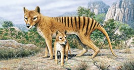 An illustration of a Tasmanian tiger and its pup. (Image: Rod Scott)