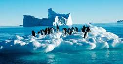 Adelie penguins on bergy bit, Davis vicinity, Antarctica (Photo: Frederique Olivier, Australian Antarctic Division)