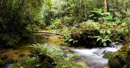 Plant diversity in the Daintree Rainforest (Photo: Getty Images)