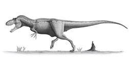 Daspletosaurus is a much larger species of tyrannosaur from the late Cretaceous  (Credit: Peter Larson/Kenneth Carpenter)