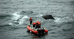 Researchers follow humpback whales in the Southern Ocean (Photo: 	© Max Quinn)