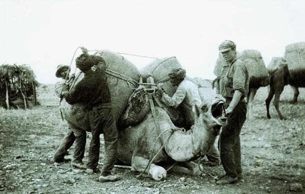 afghan cameleers australia