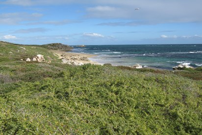 Penguin Island is a pristine destination for nature lovers. (Credit: Wikimedia commons)