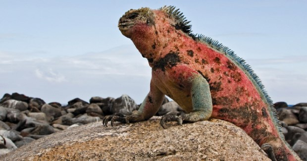 Travel Galapagos with Australian Geographic in 2010